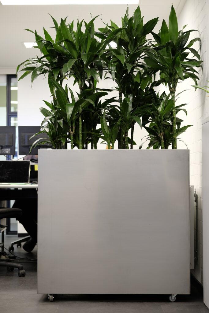 Afscherming door planten
